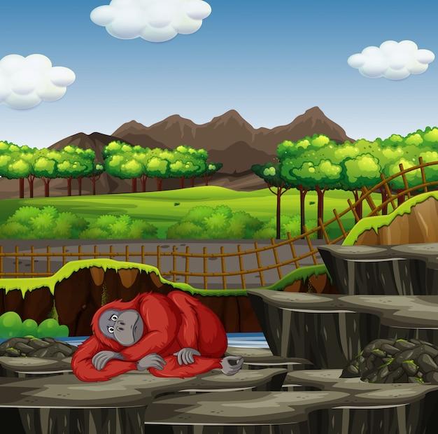 Scène met gorilla die in de dierentuin rust