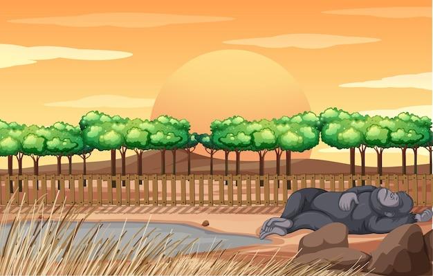 Scène met gorilla die in de dierentuin slaapt