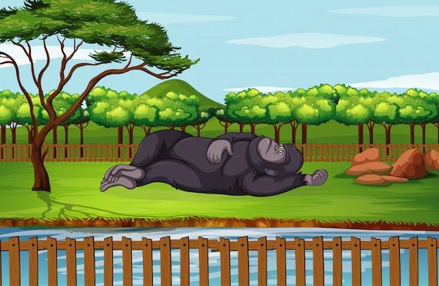 Scène met gorilla in de dierentuin