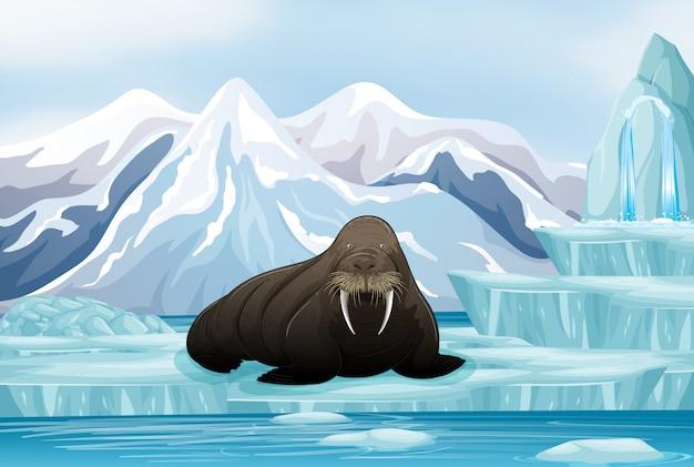Scène met grote walrus op ijs