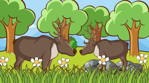Scène met herten in het park