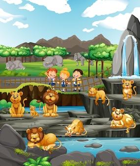 Scène met kinderen en veel leeuwen
