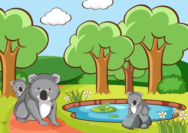 Scène met koala in het park
