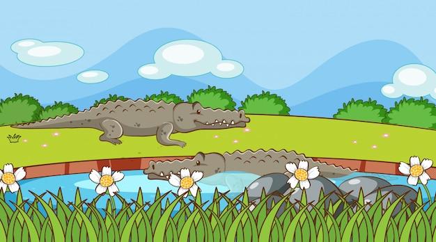 Scène met krokodillen in de rivier