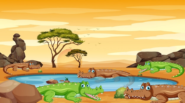 Scène met krokodillen in de vijver