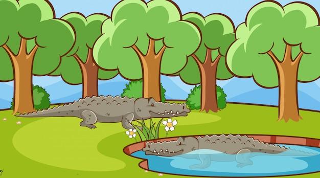 Scène met krokodillen in het park