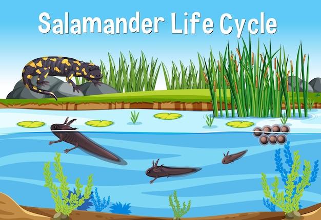 Scène met levenscyclus van salamander