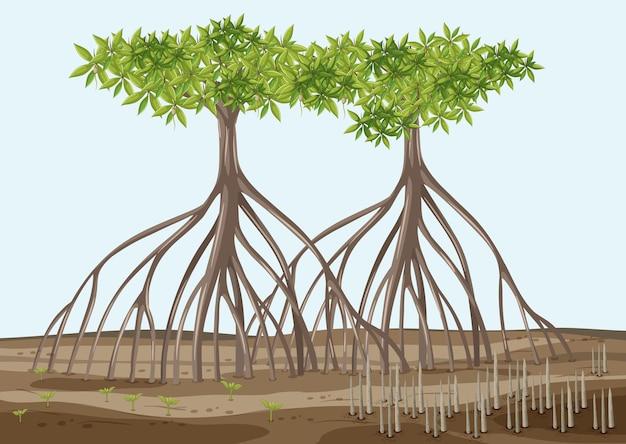 Scène met mangrovebomen in cartoonstijl