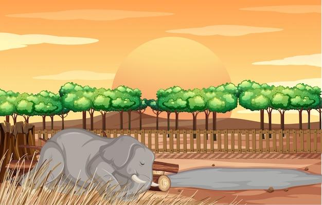 Scène met olifant in de dierentuin