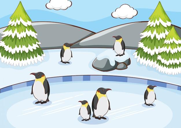 Scène met pinguïns in de sneeuw