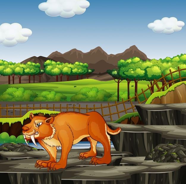 Scène met sabertooth in de dierentuin
