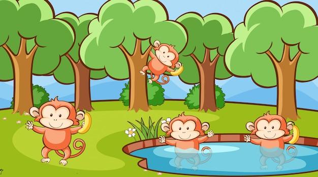 Scène met schattige apen in bos