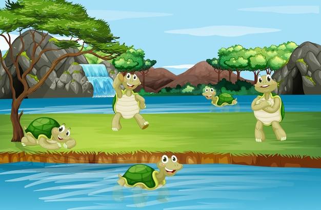 Scène met schildpad in het park