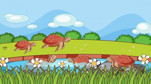 Scène met schildpadden in de vijver