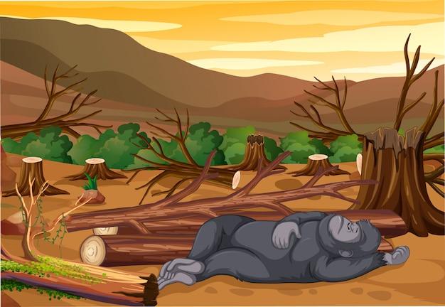 Scène met stervende aap en ontbossing