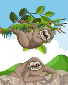 Scène met twee schattige luiaards die op de rots en de boom beklimmen