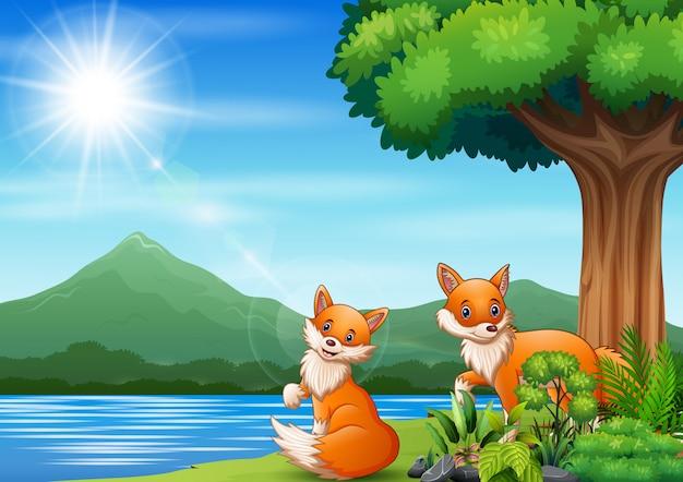 Scène met twee vossen bij de rivier