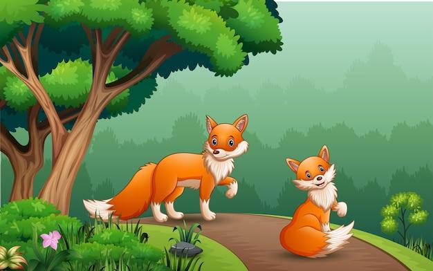 Scène met twee vossen op de weg