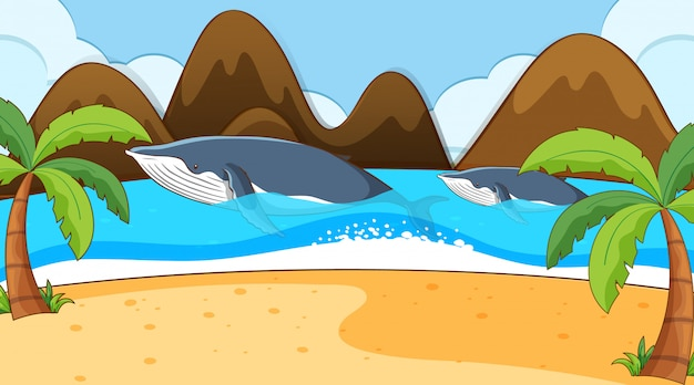 Scène met twee walvissen in de oceaan