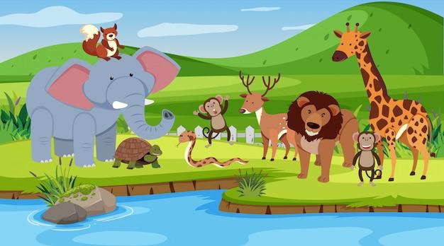 Scène met veel dieren die aan de rivier staan