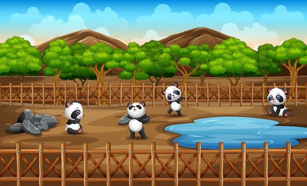 Scène met veel panda's in de open kooi van het dierentuinpark op aard