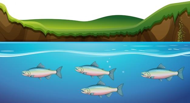 Scène met vissen onder de rivier