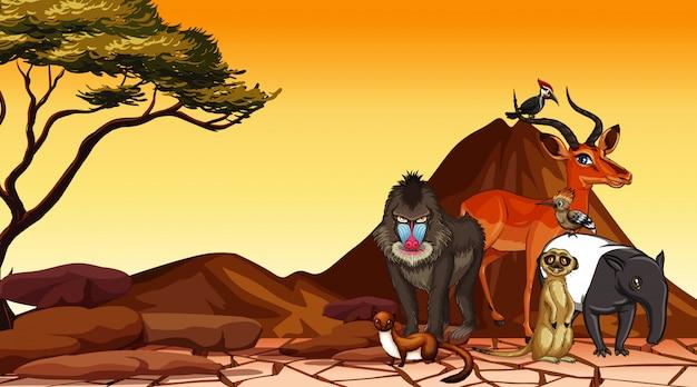 Scène met wilde dieren in het veld