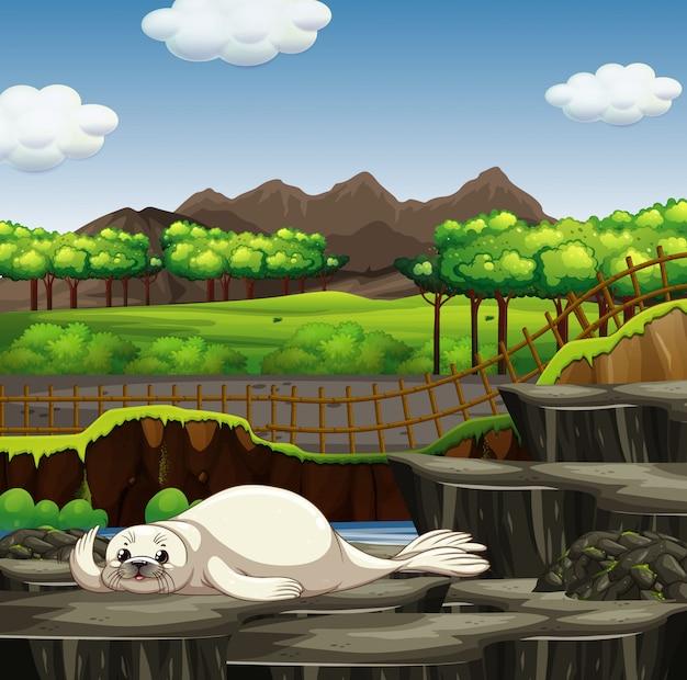 Scène met witte zeehond in de dierentuin