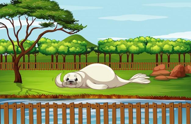 Scène met zeehond in de dierentuin