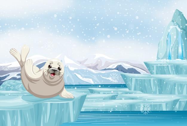 Scène met zeehond op ijs