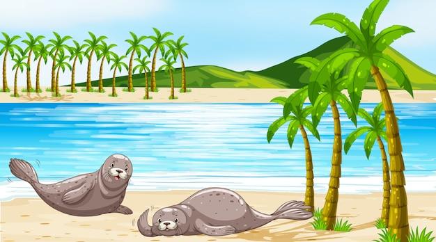 Scène met zeehonden op het strand