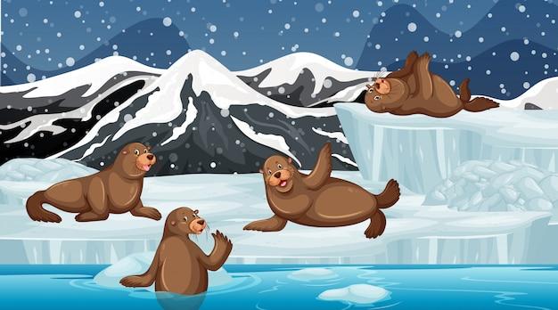 Scène met zeehonden op ijs