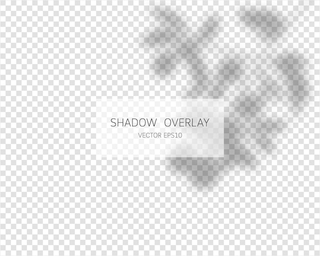 Schaduw overlay-effect. natuurlijke schaduwen geïsoleerd op transparante achtergrond.