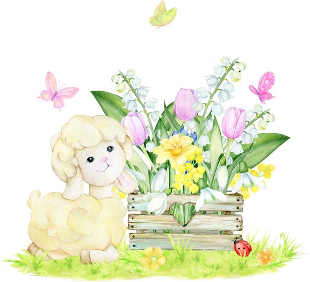 Schapen, houten kist, sneeuwklokjes, witte lelietjes-van-dalen, narcissen, tulpen, vlinders. waterverfconcept op een geïsoleerde achtergrond. lente samenstelling.
