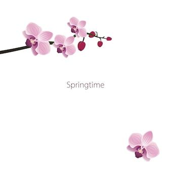 Schattig orchideeën frame of bloemen ansichtkaart lente roze bloeiende compositie met knoppen en bladeren feestelijk...