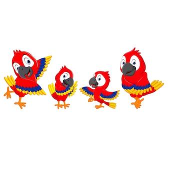 Schattig papegaai cartoon