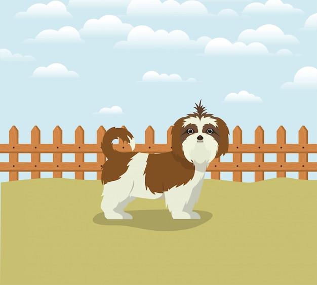 Schattig shistzu hond huisdier karakter in het kamp