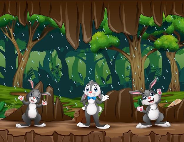 Schattige drie konijnen in de grotingang illustratie