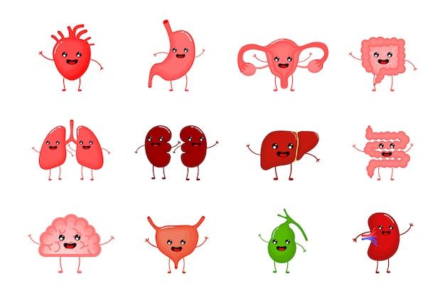 Schattige en grappige gezonde menselijke sterke organen stripfiguren instellen.