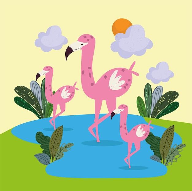 Schattige flamingo's in het meer
