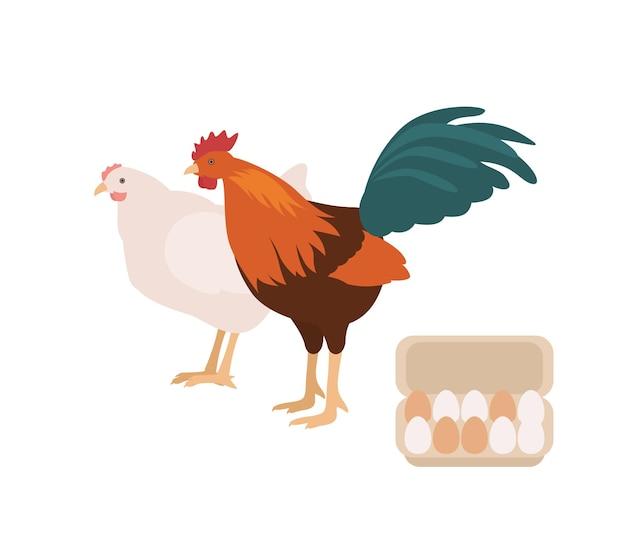 Schattige haan, kip en doos of doos vol eieren. haan en kip geïsoleerd op een witte achtergrond. huishoenders met vrije uitloop, koppels pluimvee of boerderijvogels. platte cartoon kleurrijke vectorillustratie.