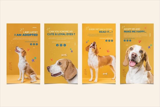 Schattige hond adopteert een huisdier instagram-verhalen