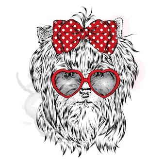 Schattige hond in glazen met hartjes