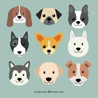 Schattige hond rassen