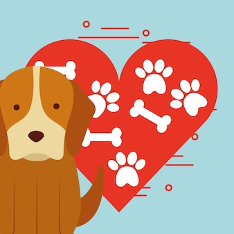Schattige hond zit met poot en bot hart liefdeshond huisdier