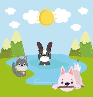 Schattige honden die op het water spelen