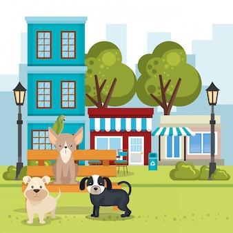 Schattige honden in de parkscène