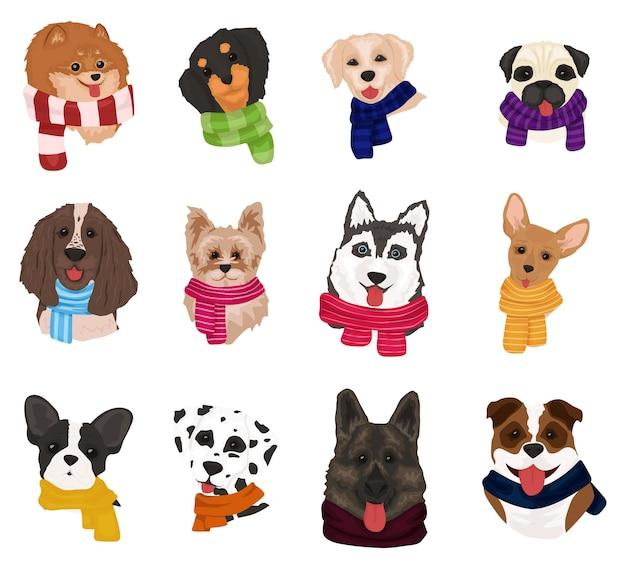 Schattige honden in gebreide sjaals.