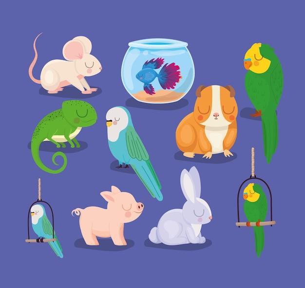 Schattige huisdieren groep