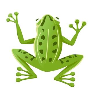 Schattige lachende groene kikker zittend op de grond cartoon dierlijk ontwerp platte vectorillustratie